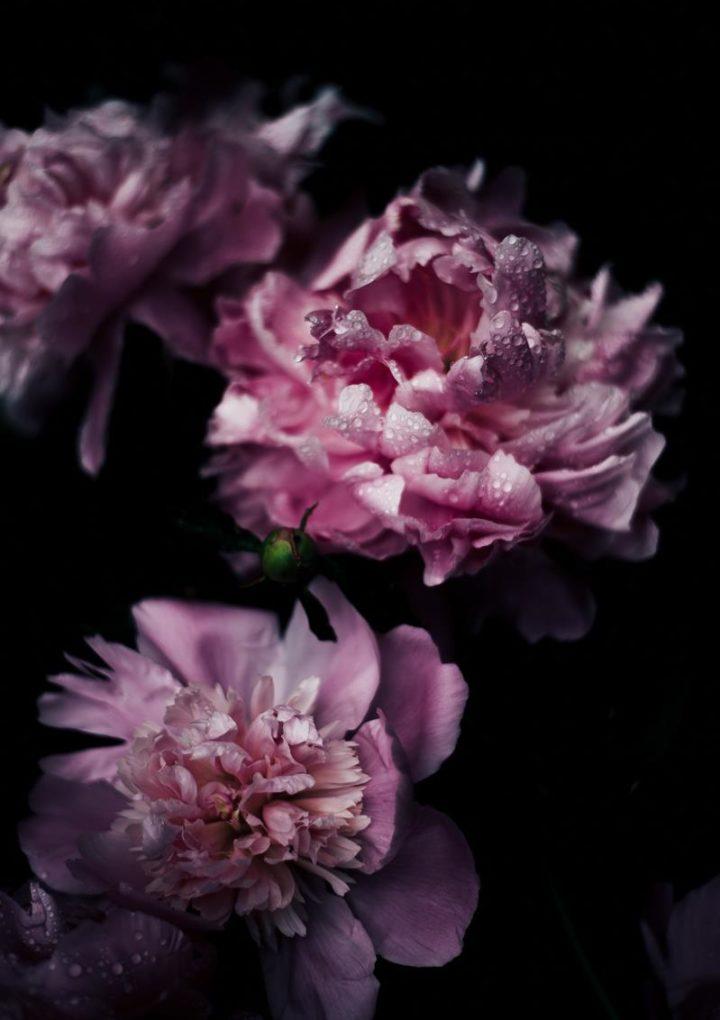 Poczta kwiatowa – ile kosztują bukiety z dostawą pod wskazany adres?