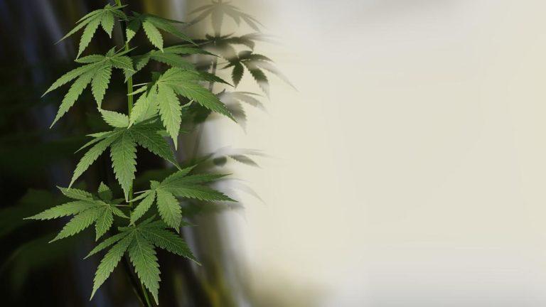 Co jest potrzebne do uprawy marihuany?